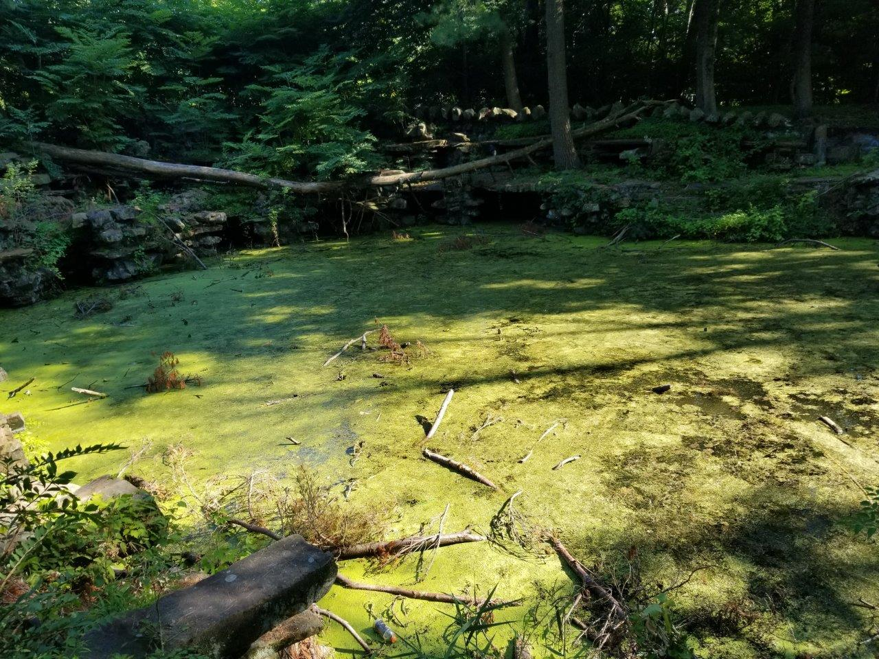 The HofHeimer Grotto, Stagnant water